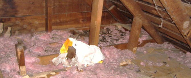 Attic Cleanouts - Animal Cleanouts