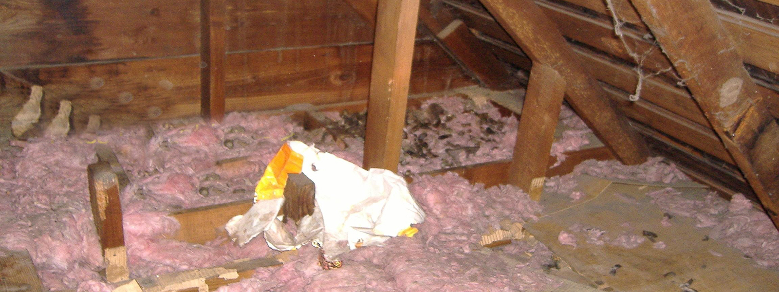 Cleaning Your Attic From Animal Droppings Cavanaughs Pest